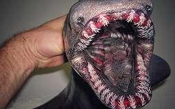 Penampilan Makhluk-Makhluk 'Alien' dari Dasar Laut Rusia